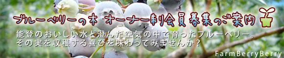 ブルーベリーの木オーナー制会員募集のご案内。能登のおいしい水と澄んだ空気の中で育ったブルーベリー。その実を収穫する喜びを味わってみませんか?