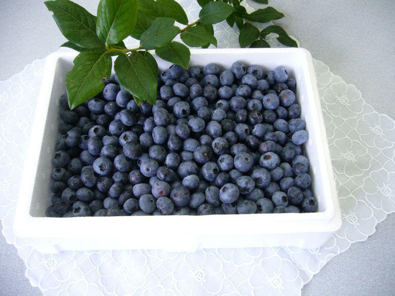 画像1: 冷凍ブルーベリー 1kg (1)